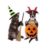 Фокус-или-обрабатывать кота и собаки хеллоуина стоковая фотография