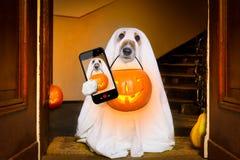 Фокус или обслуживание собаки призрака хеллоуина стоковое изображение rf