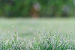 Фокус и конец поля зеленой травы мягкие вверх по зеленой траве Принципиальная схема дня земли Стоковое Изображение RF