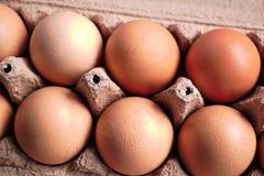 фокус 2 коричневых яичек первый Стоковое Фото