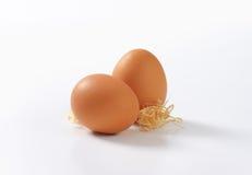 фокус 2 коричневых яичек первый Стоковые Фотографии RF
