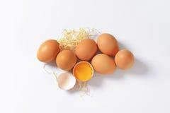 фокус 2 коричневых яичек первый Стоковое Изображение RF