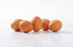 фокус 2 коричневых яичек первый Стоковое Изображение