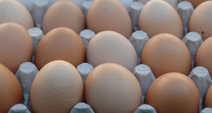 фокус 2 коричневых яичек первый Стоковая Фотография RF