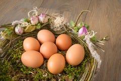 фокус 2 коричневых яичек первый Стоковая Фотография