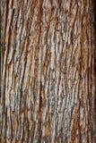 Фокус крупного плана текстуры коры дерева селективный Польза расшивы Брайна деревянная как естественная предпосылка расшива стара Стоковые Изображения RF