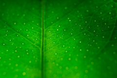 Фокус макроса лист мягкий Стоковое фото RF
