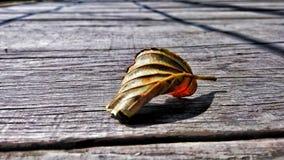 Фокус на листьях Стоковая Фотография