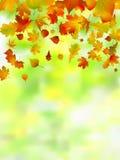 фокус осени выходит отмелой очень Стоковая Фотография RF