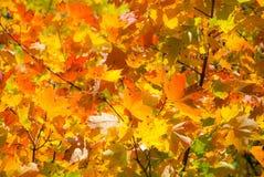 фокус осени выходит отмелым очень Стоковая Фотография