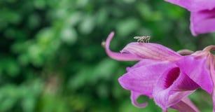 Фокус пчелы стоковые изображения