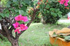 Фокус цветка бугинвилии фиолетовый селективный Стоковые Фотографии RF