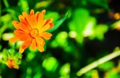 Фокус яркого желтого цветка селективный (малая глубина поля) Стоковое фото RF