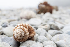 Фокус Seashell селективный Стоковые Изображения RF