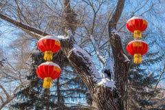 4 фонарика вися от дерева в зиме Стоковая Фотография