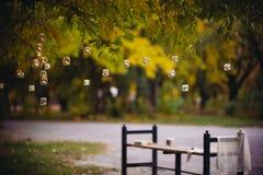 Фонарики на дереве Стоковое фото RF