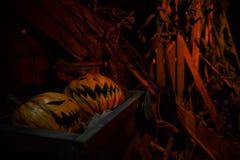фонарики o jack Стоковое фото RF