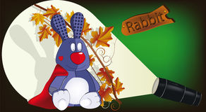 фонарик зайцев Стоковое Фото