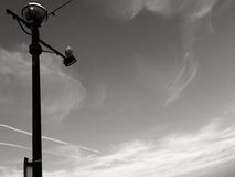 Фонарный столб улицы на левой стороне с чайкой Стоковые Изображения