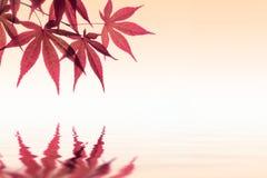 Фоновое изображение кленового листа Стоковое фото RF