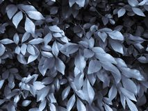 Фоновое изображение листьев использует влияния цвета масла в Photoshop иллюстрация штока
