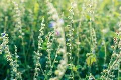 Фоновое изображение природы с зелеными и желтыми оттенками стоковое изображение