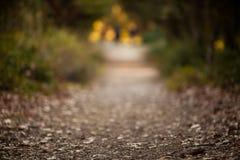 Фоновое изображение пути в лесе, используя объектив который Produc Стоковые Фотографии RF
