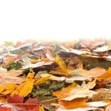 Фоновое изображение с упаденными листьями осени стоковые фотографии rf