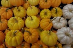 Фоновые изображения тыквы vegetable стоковые фотографии rf
