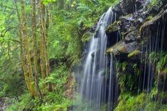 Фонтанируя Тихий океан поток тропического леса Стоковые Изображения