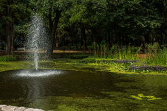 Фонтан ботанического сада Стоковая Фотография RF