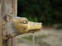 Фонтан волка головной в Риме Италии Стоковая Фотография