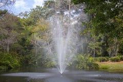 Фонтан в пруде природы Стоковая Фотография