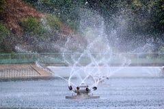 Фонтан в пруде Стоковые Изображения