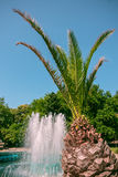 Фонтан и пальма в Варне, Болгарии Стоковое фото RF