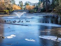 Фонтан на ледистом озере с утками Стоковое Фото