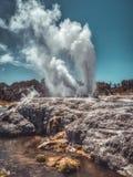 Фонтан пара гейзера в Новой Зеландии стоковые фотографии rf