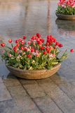 Фонтан с flowerbeds тюльпанов в Амстердаме, Нидерланд стоковые изображения
