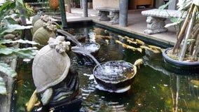 Фонтан черепахи и рыбы карпа Стоковое Фото