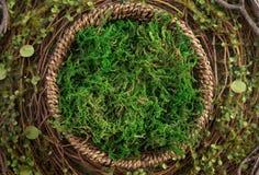 Фон цифров гнезда мха Newborn стоковые изображения rf