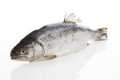 форель рыб свежая Стоковое Изображение