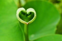 форма влюбленности лотоса листьев Стоковые Фото