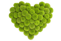 форма влюбленности хризантемы Стоковая Фотография RF