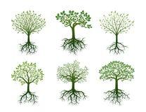 Форма деревьев, корней и листьев также вектор иллюстрации притяжки corel Стоковые Фотографии RF