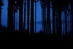 Форма деревьев Стоковое Изображение