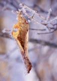 Форма ледяных кристаллов на вянуть лист и ветвях падения Стоковое Изображение RF