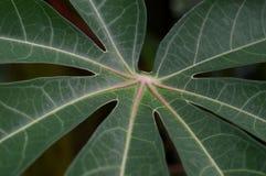 Форма и текстура тропических зеленых листьев стоковое фото rf