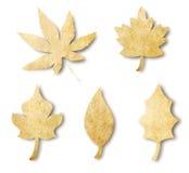 форма листьев бумажная различная Стоковая Фотография