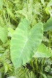 форма листьев Харта Стоковые Изображения