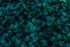 Форма округлила ключ листьев низкий Стоковое фото RF